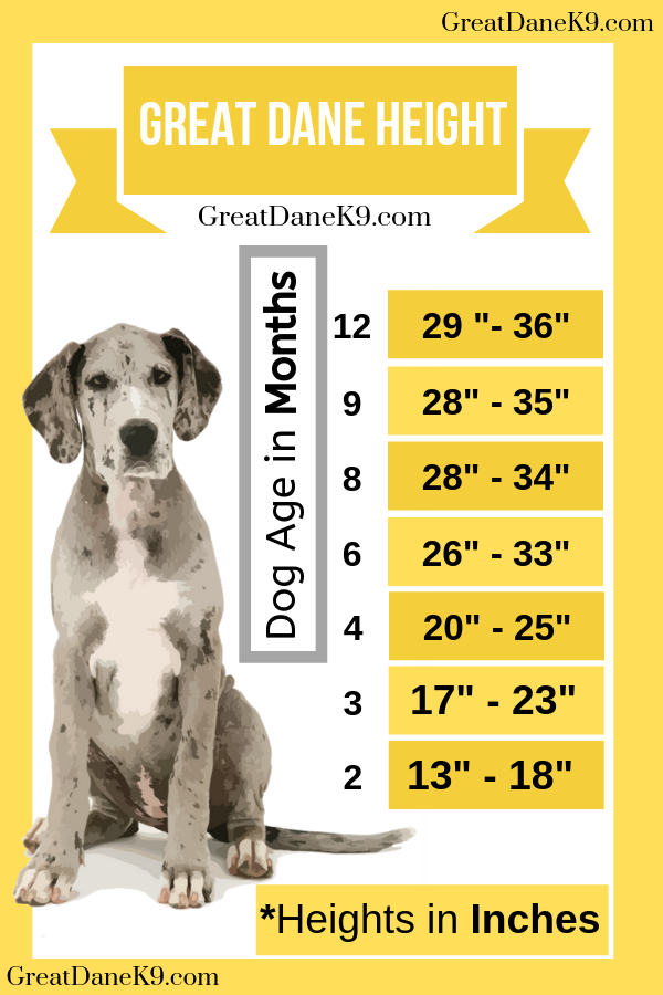 great-dane-height-chart