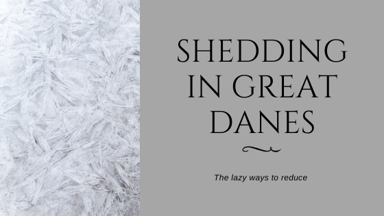 reduce-great-dane-shedding