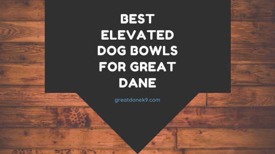 best-elevated-great-dane-feeders